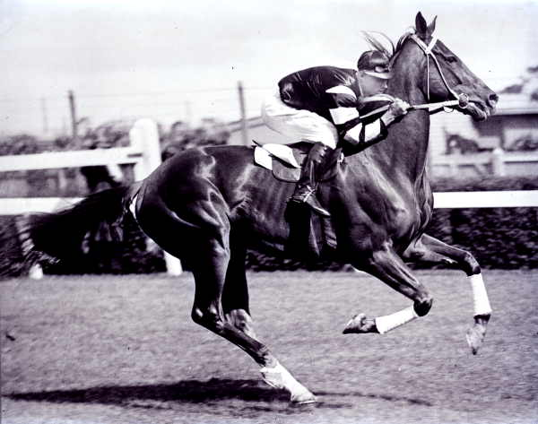 Phar Lap - famous horse - horse racing betting sites