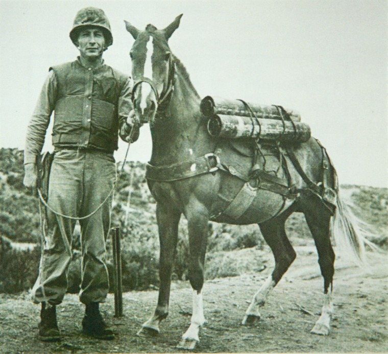 Sergeant Reckless - famous horses in history