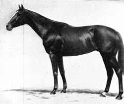 A Multi Race Winning Racehorse That Had Many Consecutive Wins - Gloaming