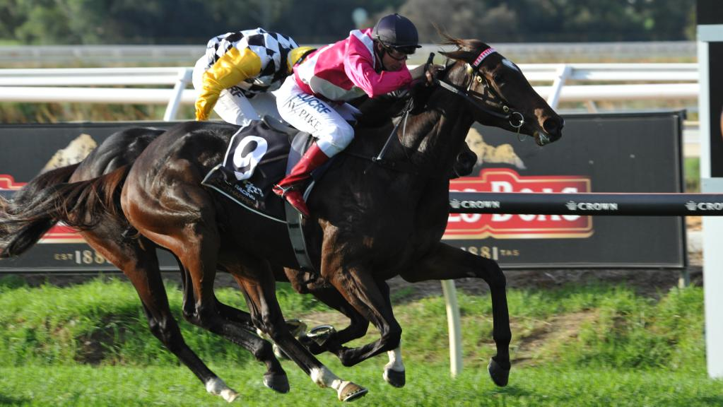 Arcadia Dream – Bay filly Trained By Grant Williams - Famous Horses