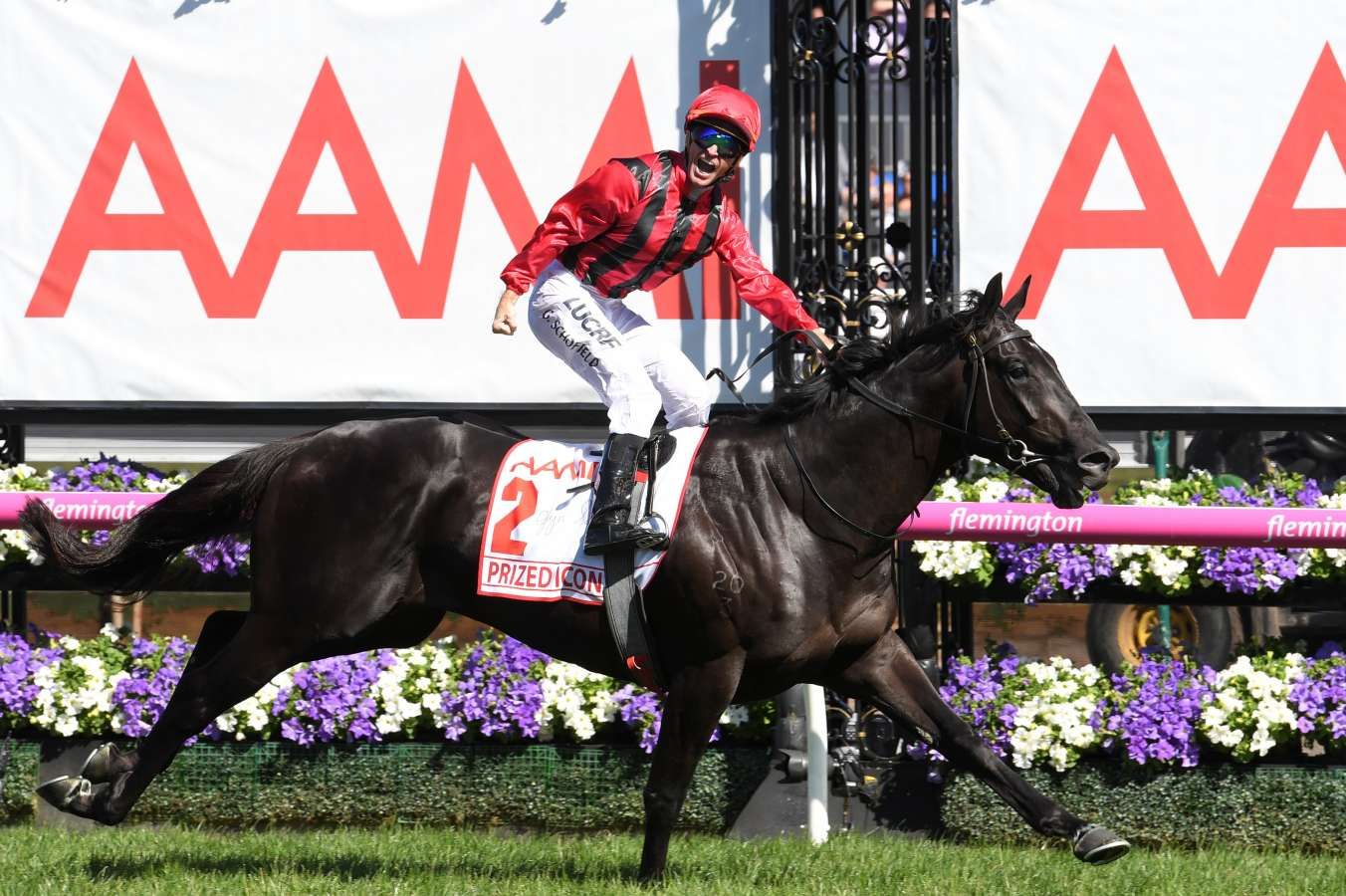 Prized Icon – Derby Winning Dark Bay Colt By More Than Ready